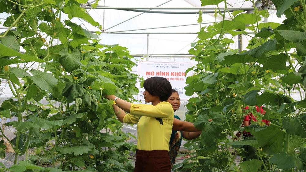 Rà soát, đăng ký hỗ trợ phát triển sản xuất nông nghiệp công nghệ cao giai đoạn 2018-2020
